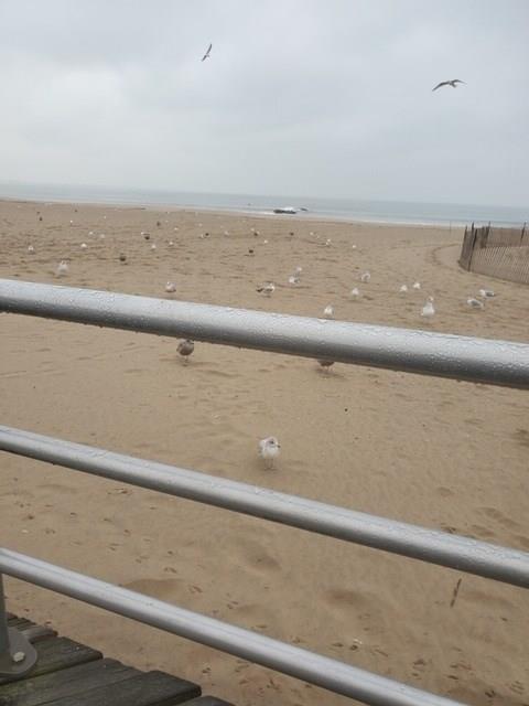 3057 Brighton 8 Street Brighton Beach Brooklyn NY 11235